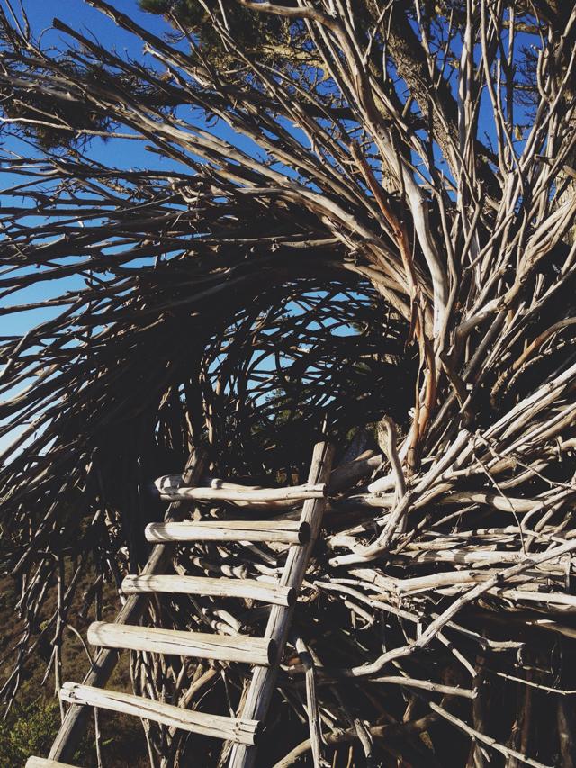 The Human Nest, Big Sur